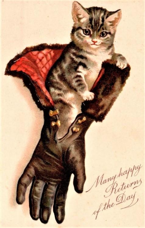 Cat in glove